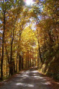 autumn fall colors scenic drive