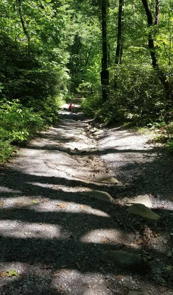 Porters Creek Trail (Fern Branch Falls)