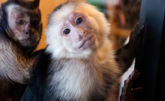 Go Bananas at Three Monkeys Photo Emporium: Click to read more