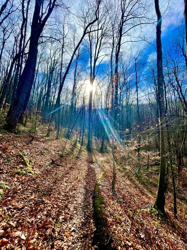 Lynn Camp Prong Trail