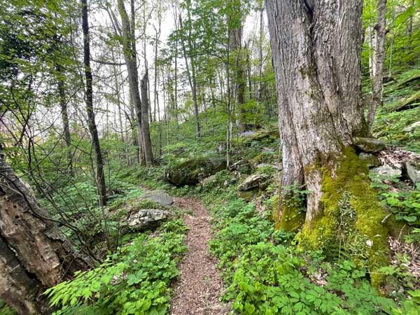 Huskey Gap Trail