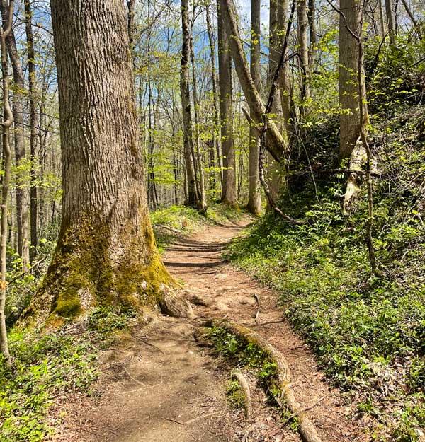 Cucumber Gap Trail
