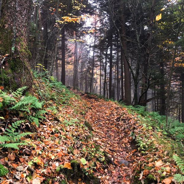 Mt Leconte Trail