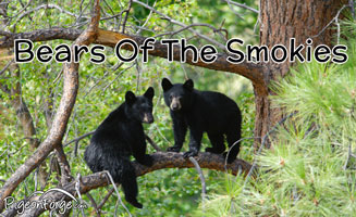 All About the Bears of the Smoky Mountains