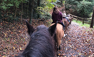Horseback Riding in Pigeon Forge + A Whole Lot More!: Click to read more.