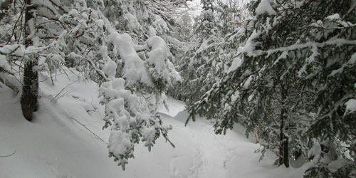 Winter Hikes: Click to visit page.