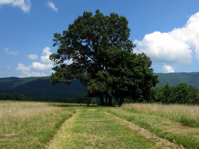View of Cades Cove LeQuire Cemetery Overlook