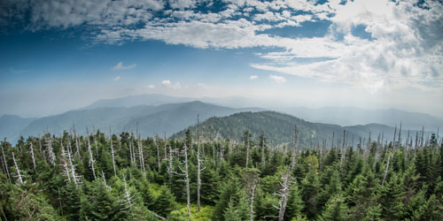 cloudy view from Clingmans Dome