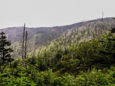 View of Clingmans Dome Parking Area