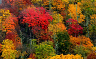 5 Ways to See Fall Colors in the Smokies