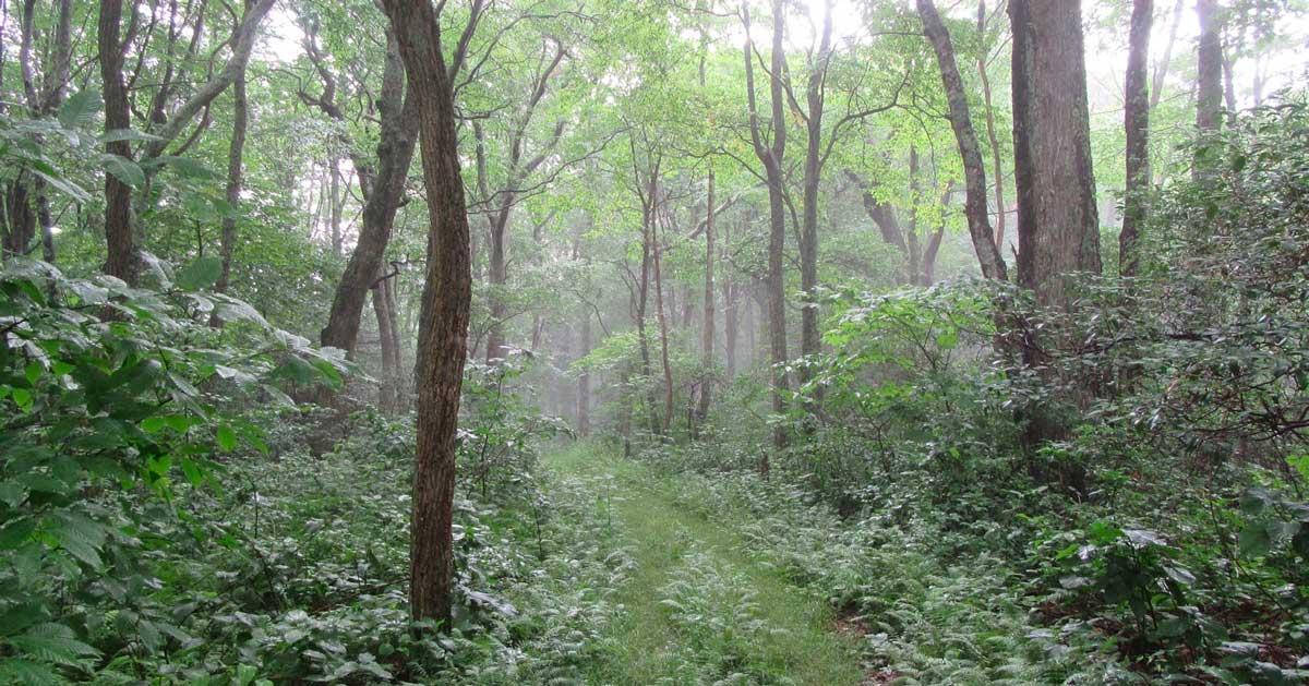 Cove Mountain Trail