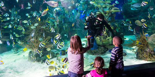 Ripley's Aquarium of the Smokies: Click to visit page.