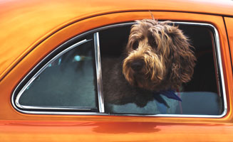 Pet Friendly Pigeon Forge: Traveling With Four Legged Family Members: Click to read more.