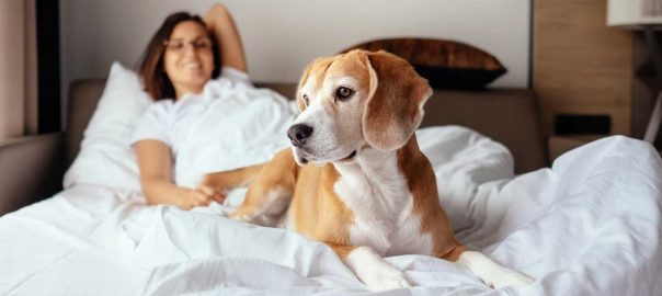 Pet Friendly Pigeon Forge Hotels: Click to read more.