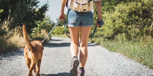 Are Dogs Allowed In The National Park?: Click to visit page.