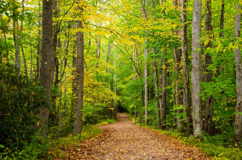 Elkmont Nature Trail