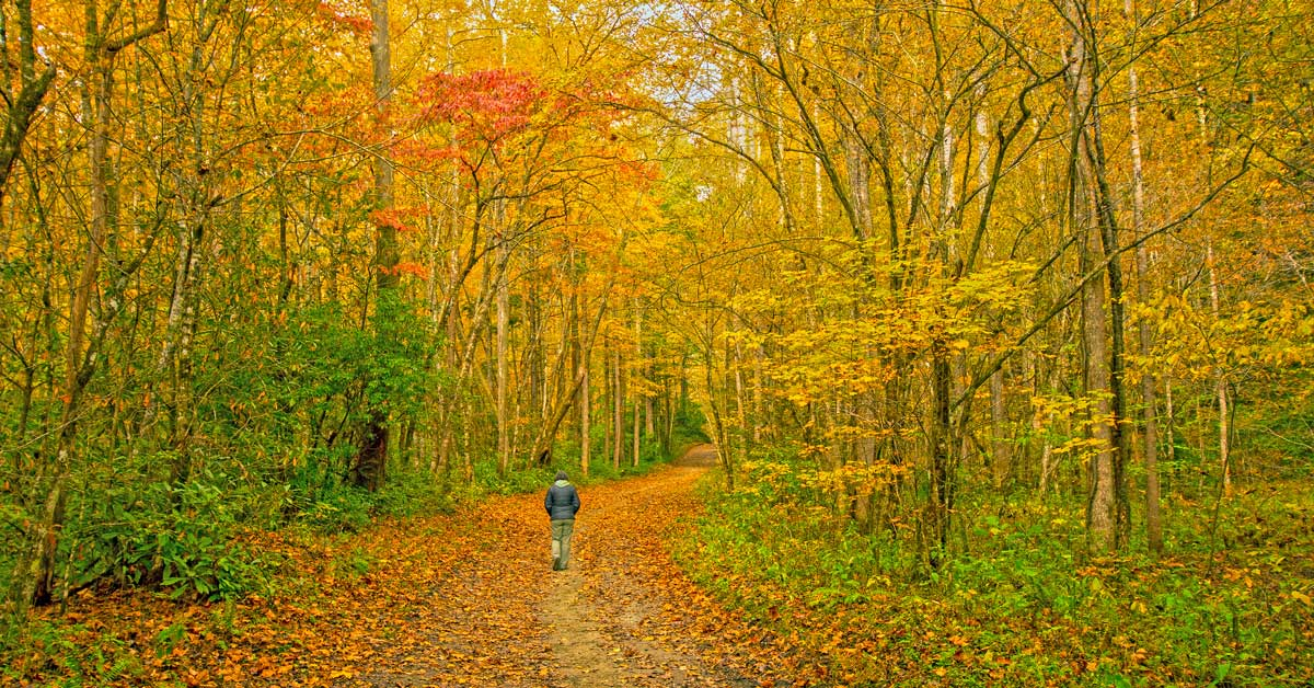 Click to open Top Fall Hikes in the Great Smoky Mountains post