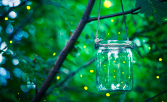 Where To See Synchronous Fireflies: Click to view post