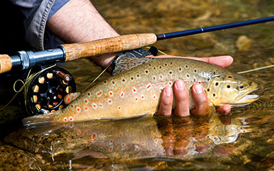 Smoky Mountain Trout Tournament: Click for event details.