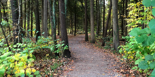Gatlinburg Hiking Trails: Click to visit page.