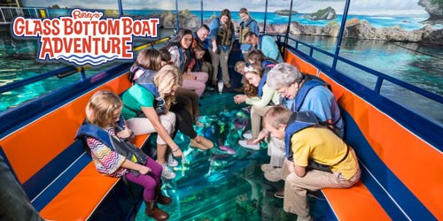Shark Boat Tour In Myrtle Beach