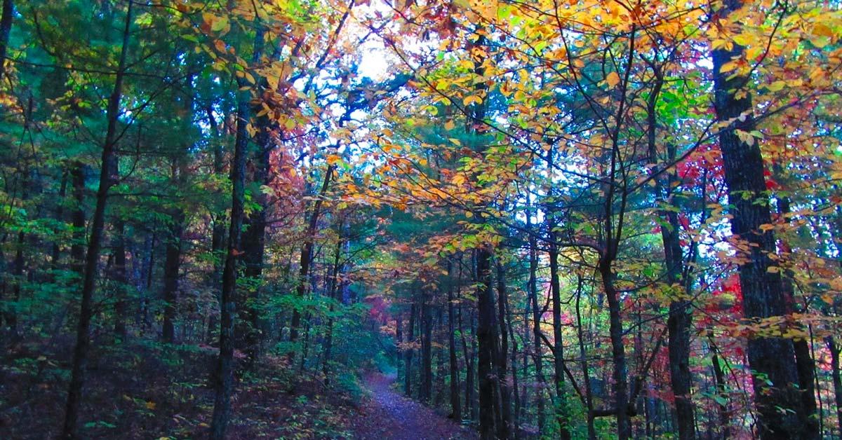 Little Greenbrier Trail