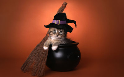 Halloween Cat Show: Click for event info.