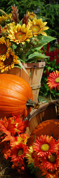 Smoky Mountain Harvest Festival: Click to go to page.