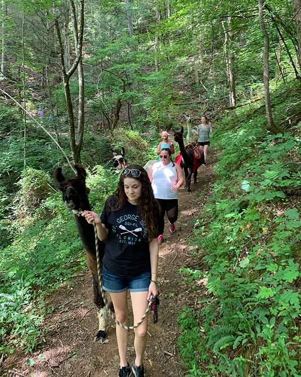 Smoky Mountain Llama Treks: Click to go to page.