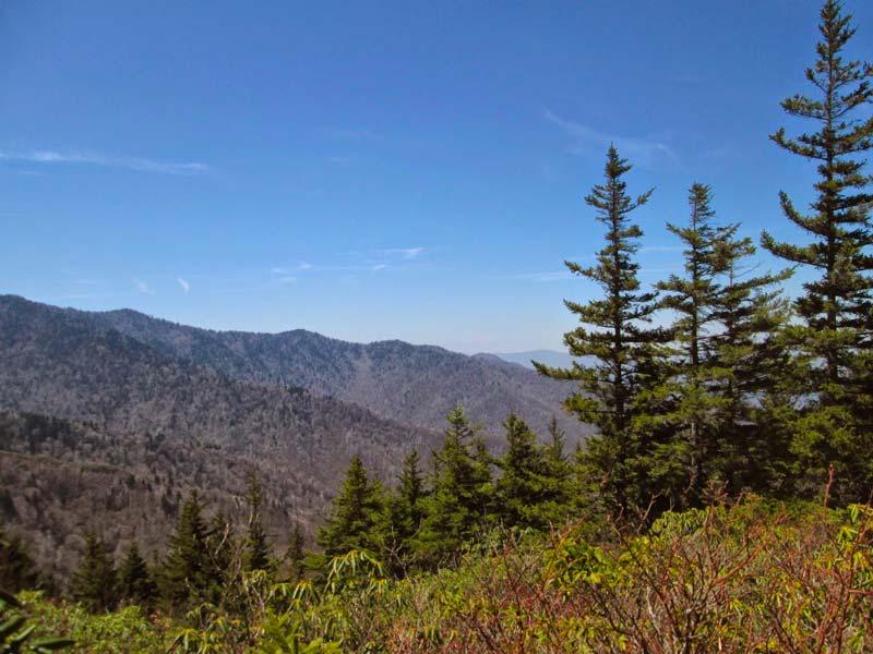 Maddron Bald Trail (Albright Grove)