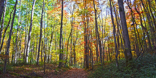 Meigs Mountain Trail: Click to visit page.