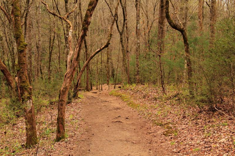 Meigs Mountain Trail