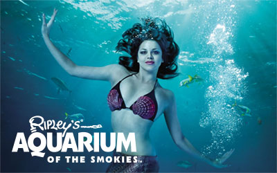 Mermaids At Ripley's Aquarium @ Ripley's Aquarium of the Smokies   | Gatlinburg | Tennessee | United States