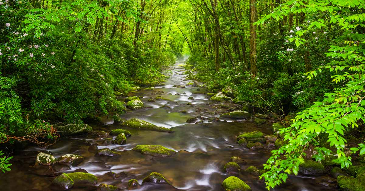 Click to open Summer Hikes In The Great Smoky Mountains post