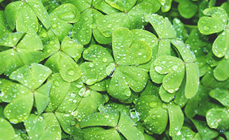3 Ways to Celebrate St. Patrick's Day in Pigeon Forge