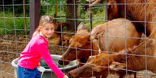 Smoky Mountain Deer Farm & Petting Zoo