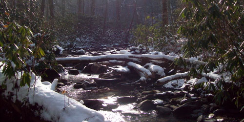 Porters Creek Trail: Click to visit page.