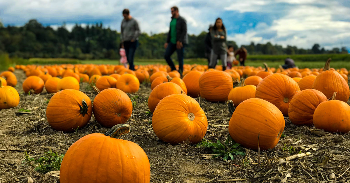Click to open Smoky Mountains Fall Events & Festivals post