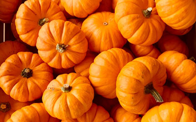 Fall Kidsfest at The Inn On The River: Click for event info.