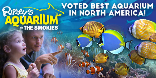 Ad - Ripley's Aquarium of the Smokies: Click to visit website
