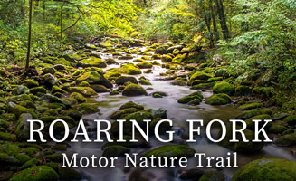 Riding the Roaring Fork Motor Nature Trail: Click to view post