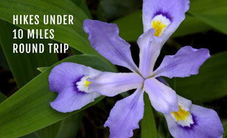 Click to view post: Short Hikes In The Smokies: Under 10 Miles Round Trip