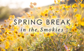 5 Reasons to Spend Spring Break in Pigeon Forge: Click to read more.