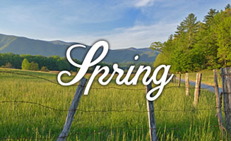 Best Smoky Mountain Spring Vacations 2020: Click to read more.