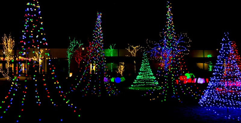 Holiday lights in the shape of Christmas trees