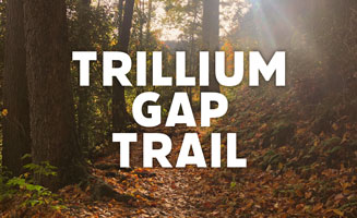 Longest Mt. LeConte Trail: Trillium Gap (8.8 Miles): Click to read more