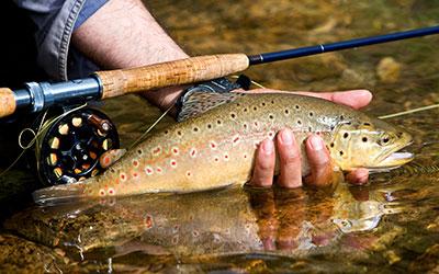 Fall Smoky Mountain Trout Tournament