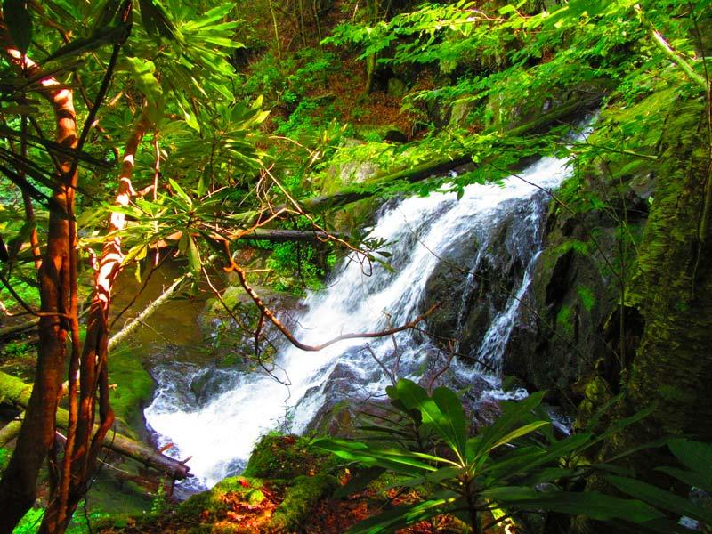 Lumber Ridge Trail