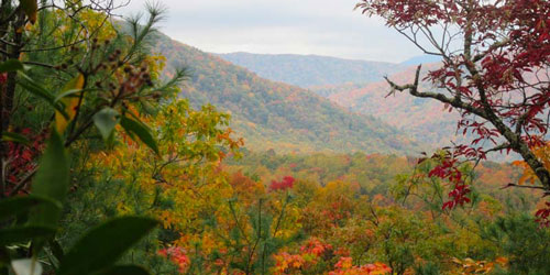 Little Greenbrier Trail: Click to visit page.