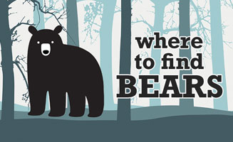 Top Places to See Bears in the Smoky Mountains: Click to read more